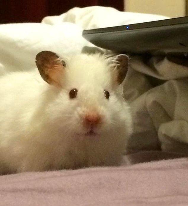 20. Bu minik canlıların sevimli mi sevimli kulakları aklını başından alır.