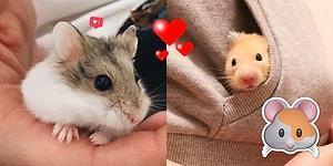 Hamsterlarını Evlatlarından Farklı Görmeyenlerin Görür Görmez Kendini Bulacağı 22 Durum