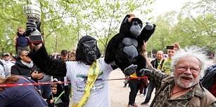 Gorillerin Nesli Tükenmesin Diye Goril Kostümüyle Sokak Sokak Dolaşan Adam