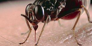 Dünya'daki Tüm Sivrisinekleri Öldürüp İçindeki Kanı Dışarı Çıkarsak Acaba Ne Olurdu?