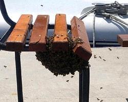 Antalya'da oğul verme nedeniyle kovandan ayrılan yaklaşık 2 bin arı bir bankı istila etti.