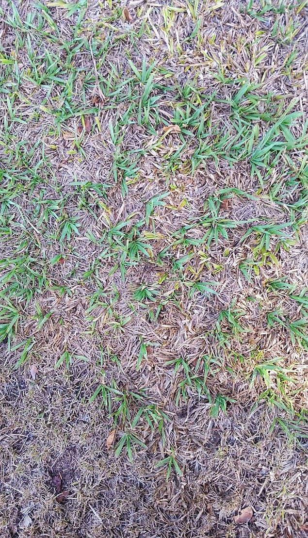 Adam Newport da geçtiğimiz günlerde buna benzer bir fotoğraf paylaştı; fakat bu seferki yılan değil, bir örümcek! Hem de kurt örümceği.