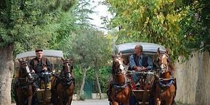'Atların Ömrü 20 Yıl, Faytonda Çalıştırılanların ise Sadece 2 Yıl'
