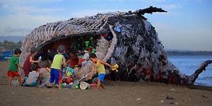 Filipinler'de Karaya Vuran ve Deniz Kirliliğini Tokat Gibi Yüzümüze Çarpan Sıradışı Bir Balina