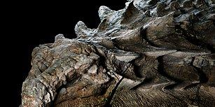 110 Milyon Yıllık Kalıp Halindeki Dinozor Fosili