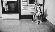 Kanser Olan Köpeğinin Son Günlerini Ölümsüzleştiren Kadından Göz Yaşartan Bir Hikaye