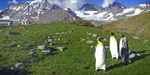 Küresel Isınma Yine Kritik Seviyede! Araştırmalara Göre Antartika Yeşil Alana Dönüşüyor