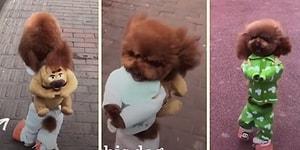 Çoğu Kişinin Güldüğü Ama Bazılarının İçini Derinden Acıtan Viral Köpek Videosu!