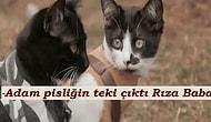 Bu Minnoş Kedi Gifleriyle Anlattığımız Dizileri Tahmin Edebilecek misiniz?