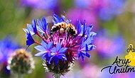 Doğanın Çeşitlenmesi, Çiçeklerin Tozlaşması, Ağaçların Meyve Vermesi İçin Doğayı Koru, Arıyı Koru