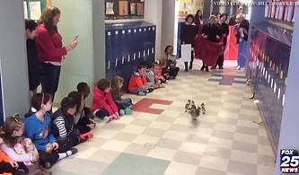 Tüm Okulun Katılımıyla Düzenlenen Muhteşem Seremoni: Yavru Ördekler Anneleriyle İlk Defa Suya Giriyor