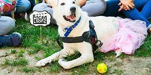 Dövülmüş ve Felç Kalmıştı: Leyla Köpeğin Mutlu Sonla Biten Muhteşem Yeniden Doğuş Öyküsü!