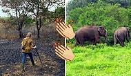 1991'de Aldıkları Yağmur Ormanını 26 Sene Boyunca Ağaçlandırıp Hayata Döndüren Çift