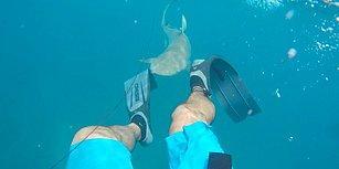 Köpek Balığı Tarafından Saldırıya Uğrayan Adamın Korku Dolu Anları