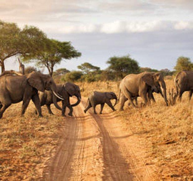 Afrika'da safari