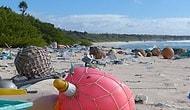Dünya Çapında Plastik Atık Rekoru Kıran Issız Henderson Adası