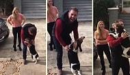 Uzun Süredir Görmediği Dostuna Kavuşunca Sevinçten Kendini Kaybeden Köpek