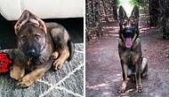Can Dostu Köpeklerin Yavru ve Yetişkin Yaşlarını En Minnoş Şekilde Yakalamış 34 Fotoğraf