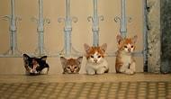 """Sinema Salonlarını Patilediler: """"Kedi"""" ABD'de En Çok İzlenen Türk Filmi Oldu!"""