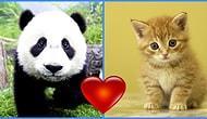 Hangi Yavru Hayvansın? 🐶