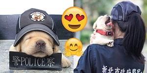 Tayvan Polis Kuvvetinin Yepyeni Üyeleri: Şirinliğiyle Tüm Dünyanın Kalbini Eriten Köpüşler