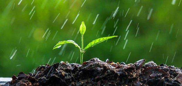 Yağmur sonrası toprak