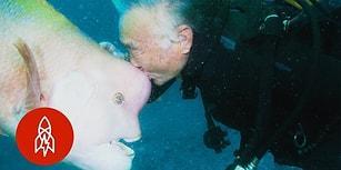 25 Yıllık Mükemmel Dostluk: Balık Dostu İçin Yıllardır Aynı Yere Dalan Dalgıç