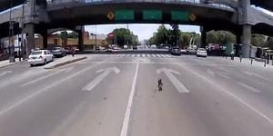 Trafiğin Ortasına Dalıp Dostunun Ömründen Ömür Yiyen Yaramaz Köpek