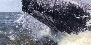 Devasa Boyuyla Teknenin Yakınında Suyun Üzerine Sıçrayan Balinanın Akıl Tutulması Yaşattığı An