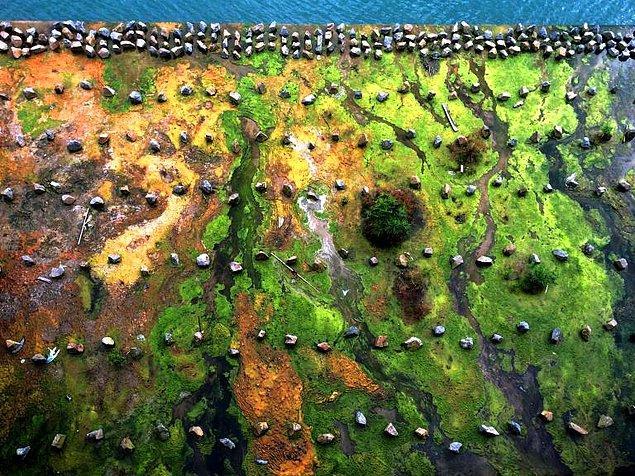 11. Hong Kong'da sudan fırlayan yosunlar