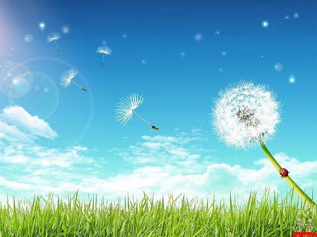 13. Hangi elementin havada bulunma oranı daha fazladır?