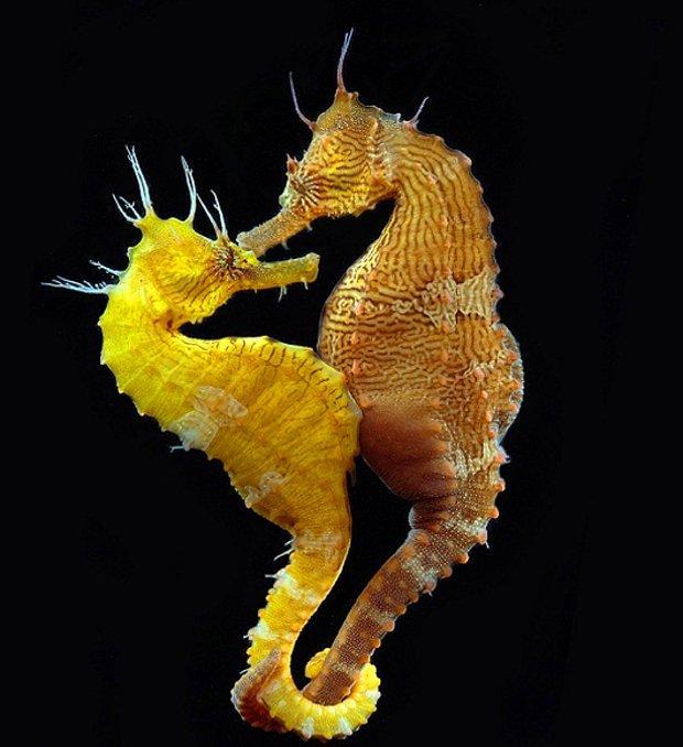 Birbirine bakan iki denizatı