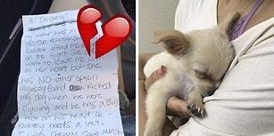 Yanında Yürek Burkan Mektupla Sahibi Tarafından Havaalanına Terk Edilen Yavru Köpüş