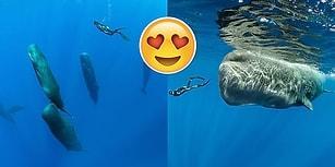 İspermeçet Balinasını Uyurken Yakalayıp Eşi Benzeri Görülmemiş Kareleri Çeken Fotoğrafçı
