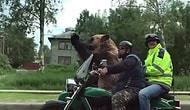 Motorla Gezerken Rus Halkını Selamlayan Ayı