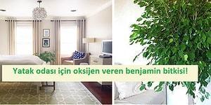 Her Odaya Bir Çiçek! Evin Farklı Yerlerinde Kolayca Yetiştirebileceğiniz 12 Bitki Önerisi
