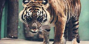 En Güçlü Hayvanları Sizin Oylarınızla Seçiyoruz!