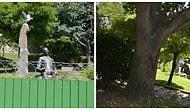 İBB Kesim Olmayacak Dedi: Aşiyan Parkı Kapatıldı, Ağaçlar İşaretlendi