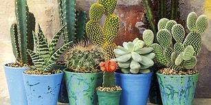 Burcunuza Göre Evinizin En Güzel Köşesine Yerleştirebileceğiniz Saksı Çiçekleri