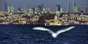 'Neden Esmiyor?' Diye Sorarken İki Kere Düşünün: İstanbul'da Kişi Başına Düşen Yeşil Alan Bir Metrekare