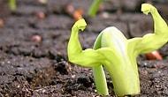 Daha Yaşanılası Bir Dünya İçin Yerel Tohum Kullanmanın Önemini Anlatıyoruz!