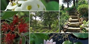 82 Yıllık Bir Çevre Mirası: Türkiye'nin En Eski Botanik Bahçesinin Diyanet'e Devredildiği Ortaya Çıktı