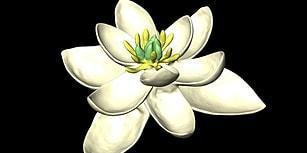 Bilim İnsanları Dünya Üzerinde Yetişen İlk Çiçeğin Neye Benzediğini Ortaya Çıkardı!
