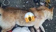 Konya'da Bir Köpek 'Dişi Köpeğe Yaklaştığı İçin' Tabanca ile Vurularak Öldürüldü