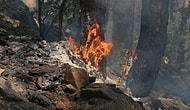 Kaz Dağları'ndan Alevler Yükseldi: Aynı Anda '4 Ayrı Noktada' Orman Yangını