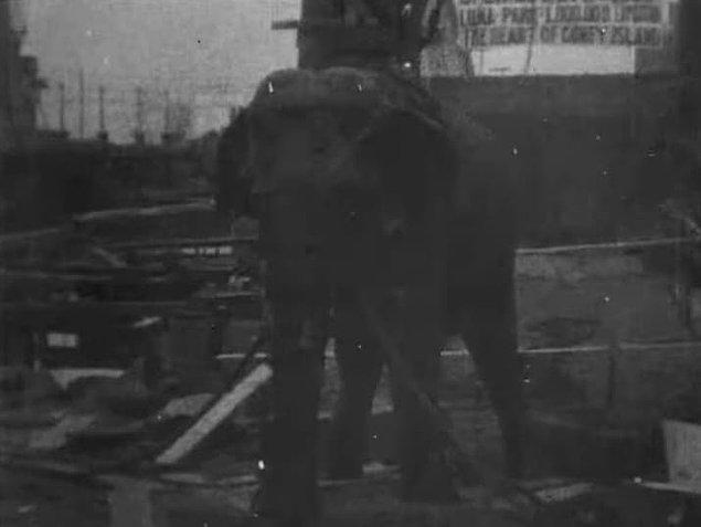 2. Thomas Edison 1903 yılında bir sirk filini elektrik vererek öldürdü ve filme çekti.