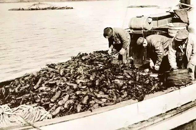 Istakoz vaktinde o kadar değersiz görülürdü ki Massachusetts kıyısına yığılır, kimi zaman balık yemi olarak kimi zaman da köpek maması olarak kullanılırdı. Gübre olarak kullanan bile vardı! Ülkemizde de durum farklı değildi.