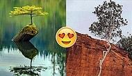 Her Türlü Çevresel Etmene Direnip, Yaşamak İçin Köklerini Toprağa Salan 28 Can