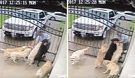 Yağmur Çamur Demeden Postacının Sevgi Dolu İlgisini Kapıda Bekleyen Köpekler