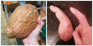 Görür Görmez Endazeyi Şaşırıp Hayatı Şöyle Bir Sorgulayacağınız 17 Tuhaf Sebze